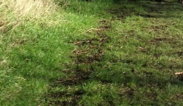 Damaged grass