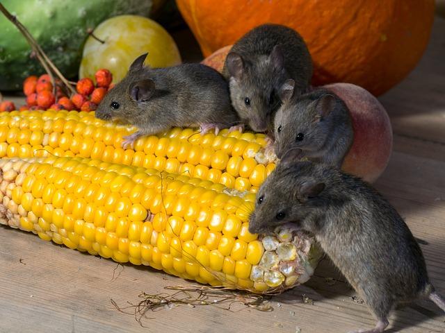 mice eating vegetables