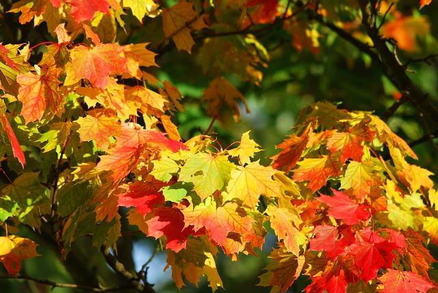 autumn-oak-foliage