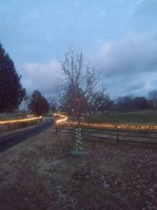 Christmas Light driveway